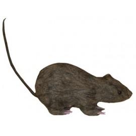 Ratón con Pelo